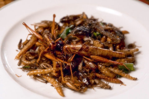 insects-nutritional-benefits